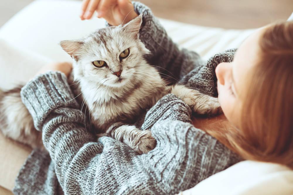 La inteligencia felina, muchos humanos la quisieran…