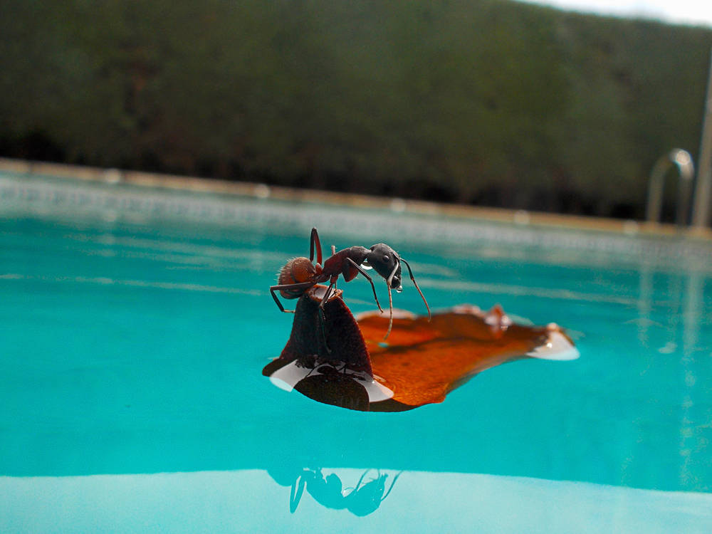 Piscina ¡sí!, pero sin bichitos…