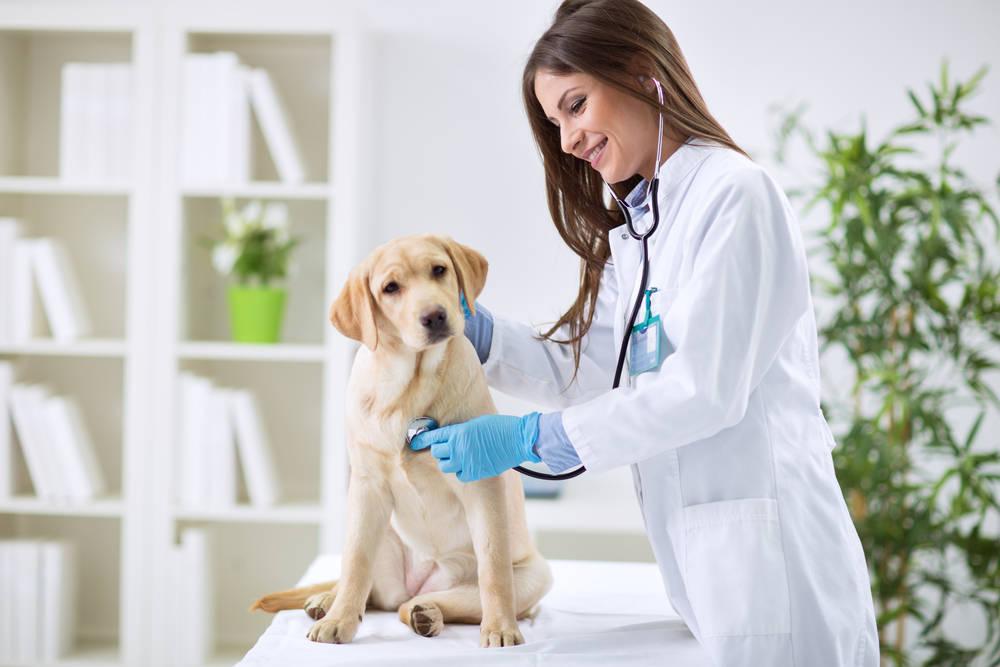 El control del dolor en las enfermedades de mascotas es importante