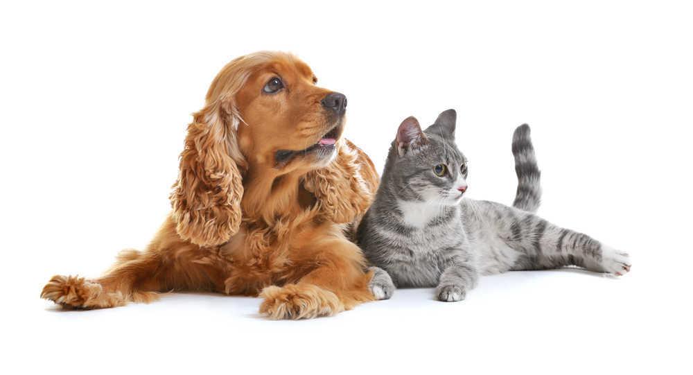 Cuidados básicos para el cuidado de perretes y gatetes