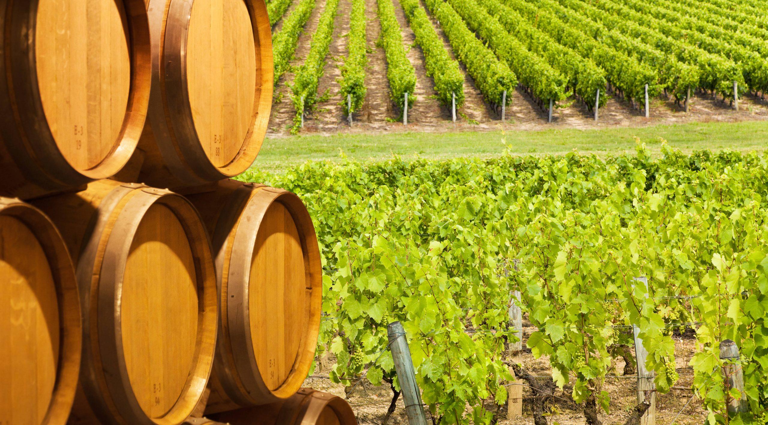 Conoce los vinos ecológicos de la A a la Z