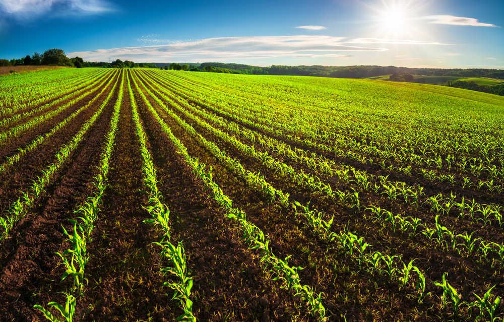 Plantas y cultivos para perpetuar la vida del planeta